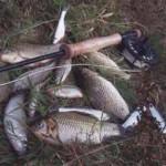 Мир нахлыста — ловим белую рыбу