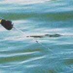 Рыбалка на реке — ловля усача