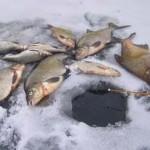 Как ловить леща зимой на водохранилищах