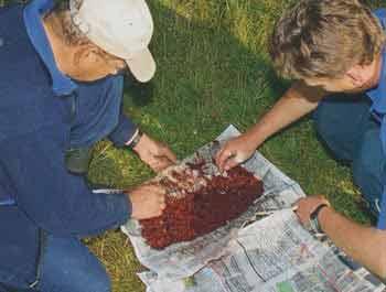 Как хранить мотыля