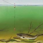Рыбалка на сома (четыре шага)