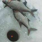 Ловля леща зимой на поплавочную снасть на водохранилищах