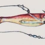 Советы бывалых рыбаков 8