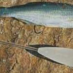 Советы бывалых рыбаков 5