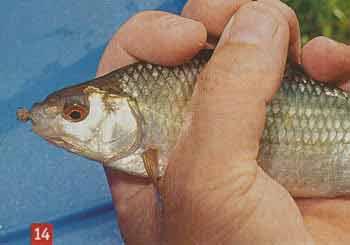 Приманка для рыбы