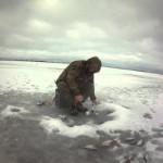 Ловля густеры зимой