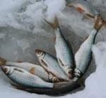 Рыбалка:  Иваньковское водохранилище.