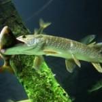 Особенности охоты под водой на реке Днепр.