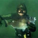 Виды морских рыб — горбыль