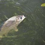 Рыбалка в Кировской области.