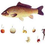 Лучшая приманка для удачной рыбалки — кукуруза