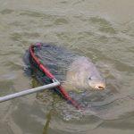 Рыболовные угодья в дельте Волги.