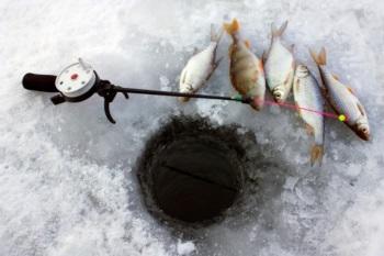Наживки для зимней рыбалки