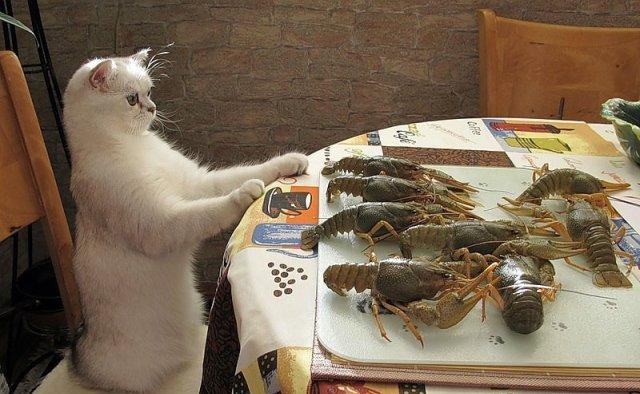 приколы о рыбалке