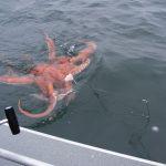 Как ловить осьминогов?