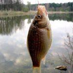 Некоторые особенности июльской рыбалки.