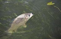 Лов рыбы в весенний период.