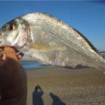 Рыба Дорадо. Где водится и чем она уникальна?